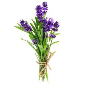 Seraj Lavender Cream Image - bouquet of lavender
