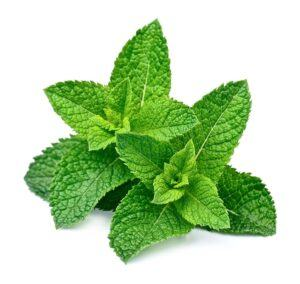 Seraj Peppermint Cream Image - Sprig of Peppermint